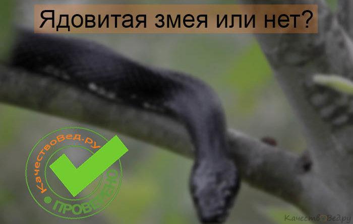 Отличие ядовитой змеи от не ядовитой