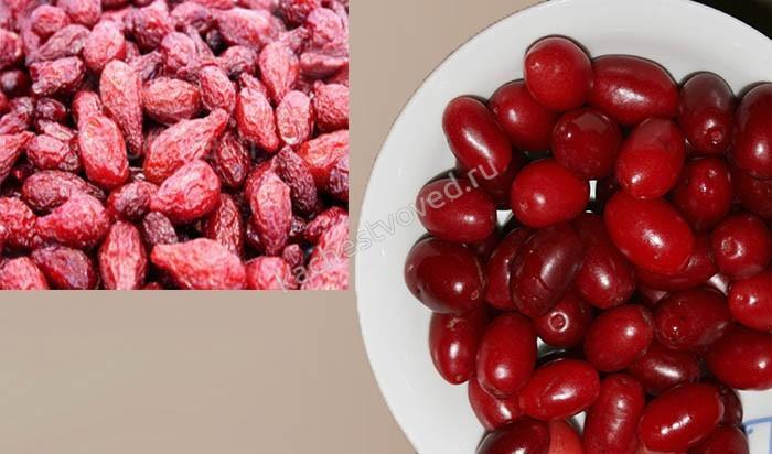Кизил фото ягод